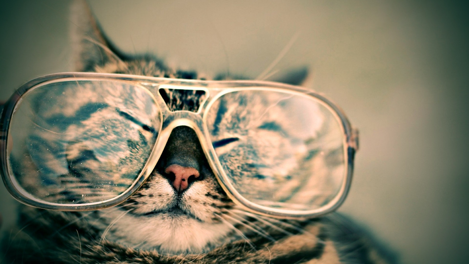 cat with big reading glasses